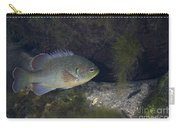 Green Sunfish Swimming Along The Rocky Carry-all Pouch