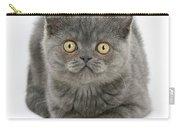 Grey Kitten Carry-all Pouch