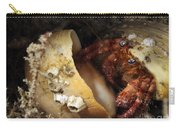 Hermit Crab Tucked Away Carry-all Pouch