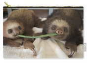 Hoffmanns Two-toed Sloth Orphans Eating Carry-all Pouch