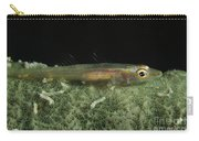 Hovering Goby On A Green Sponge, Fiji Carry-all Pouch