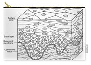 Illustration Of Stratified Squamous Carry-all Pouch by Science Source