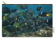 King Angelfish Holacanthus Passer Carry-all Pouch by Pete Oxford