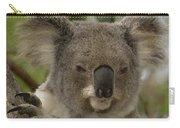 Koala Phascolarctos Cinereus Portrait Carry-all Pouch by Pete Oxford