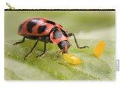 Lady Beetle Eats Potato Beetle Eggs Carry-all Pouch