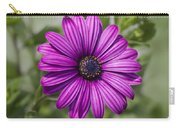 Lovely African Daisy - Osteospermum Carry-all Pouch