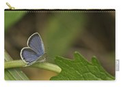 Male Eastern Tailed Blue Butterfly 3063 Carry-all Pouch