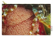 Mantis Shrimp With Egg Clutch, North Carry-all Pouch