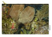 Moray Eel, Belize Carry-all Pouch