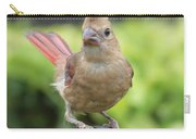 Mrs Cardinal Carry-all Pouch by Carol Groenen