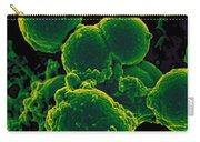 Neutrophil Ingesting Mrsa Bacteria, Sem Carry-all Pouch