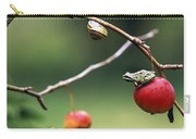 Pacific Tree Frog On A Crab Apple Carry-all Pouch
