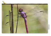 Pink Dragonfly With Sparkly Wings Carry-all Pouch