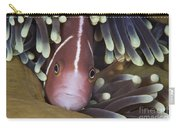 Pink Skunk Clownfish In Its Host Carry-all Pouch