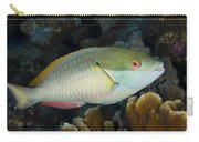 Red-banded Parrotfish Bonaire Carry-all Pouch