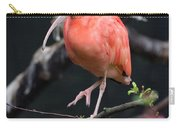 Scarlet Ibis Carry-all Pouch