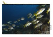 School Of Schoolmaster Snapper, Belize Carry-all Pouch