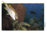 Schoolmaster Snapper, Belize Carry-all Pouch
