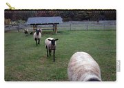Sheep Feed Time Carry-all Pouch
