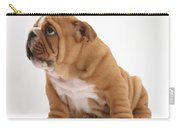 Shy Bulldog Pup Carry-all Pouch
