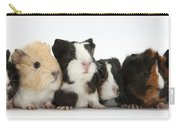 Six Young Guinea Pigs In A Row Carry-all Pouch