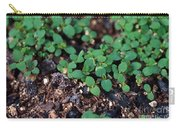 St. Johns Wort Carry-all Pouch by Science Source