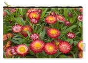 Strawflower Helichrysum Sp Red Variety Carry-all Pouch