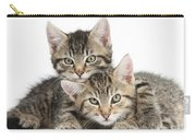 Tabby Kittens Cuddling Carry-all Pouch