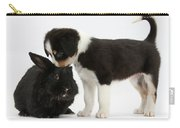 Tricolor Border Collie Pup With Black Carry-all Pouch
