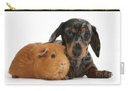 Tricolor Merle Dachshund Pup And Red Carry-all Pouch