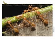 Weaver Ant Oecophylla Longinoda Group Carry-all Pouch