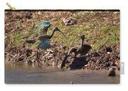 White-faced Ibis Mating Behavior In Early Spring Carry-all Pouch