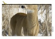 White-tailed Deer In A Snow-covered Carry-all Pouch