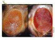 Wild & White-eosin Eyes In Drosophila Carry-all Pouch