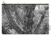 Zebra Tree Black And White Carry-all Pouch