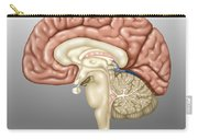 Anatomy Of The Brain, Illustration Carry-all Pouch
