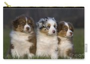Australian Shepherd Puppies Carry-all Pouch
