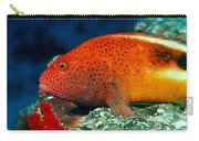 Blackside Hawkfish Carry-all Pouch