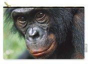 Bonobo Pan Paniscus Portrait Carry-all Pouch