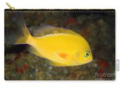 Pseudanthias Fuscipinnis Carry-all Pouch