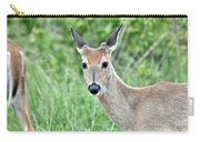 Young White-tailed Buck In Velvet Carry-all Pouch