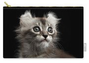 Cute American Curl Kitten With Twisted Ears Isolated Black Background Carry-all Pouch