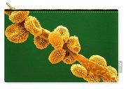 Eurotium Spores Carry-all Pouch