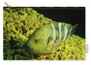 Underwater Photography Carry-all Pouch