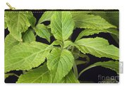 Diviners Sage Carry-all Pouch