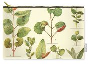Vintage Botanical Illustration Carry-all Pouch