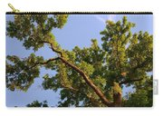 3256 Photography Forest Scene  Carry-all Pouch