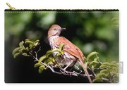 4979 - Brown Thrasher Carry-all Pouch