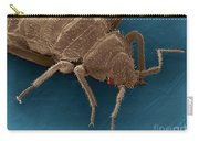 Bedbug, Cimex Lectularius, Sem Carry-all Pouch