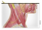 Accessory Nerve View Showing Neck Carry-all Pouch